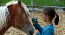 Pferde am Alpenseehof