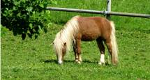 "Pony ""Piccolo"""