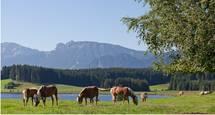 Pferde mit Panorama