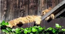 Katze im Sonnenbad